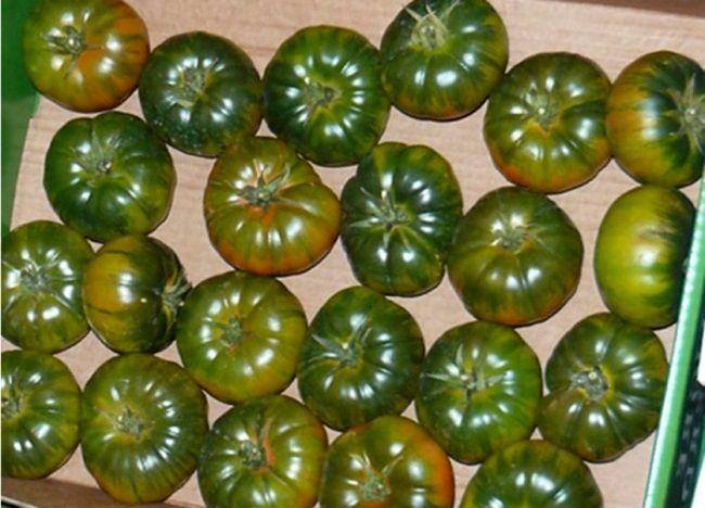 nezrele rajčice