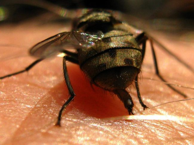 Fly proteín je uložená na zimu.