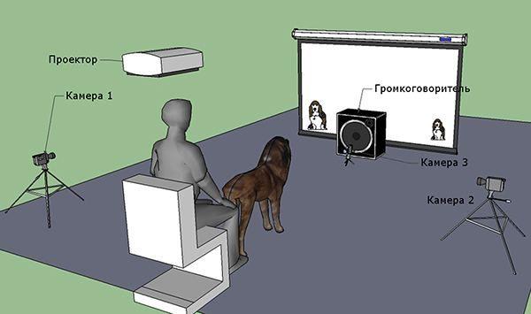 Shema eksperimenti (ilustracija PLoS ONE magazina).