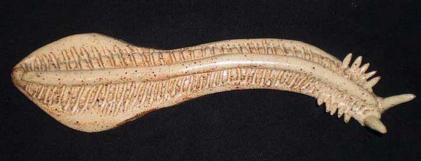 Pikaia (rekonstrukcija) - prva chordate, koji su bili