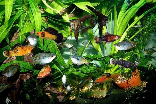 В аквариуме вода пахнет болотом что делать