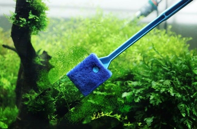 Fish tank extendable cleaner.