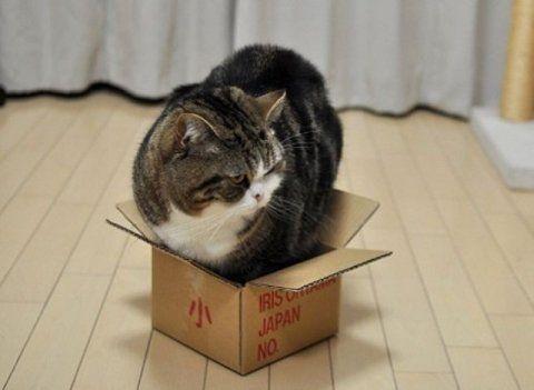 Что делать если кошка