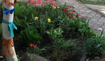 Fotografija Flowerbed tulipani u kući, radikal.ru