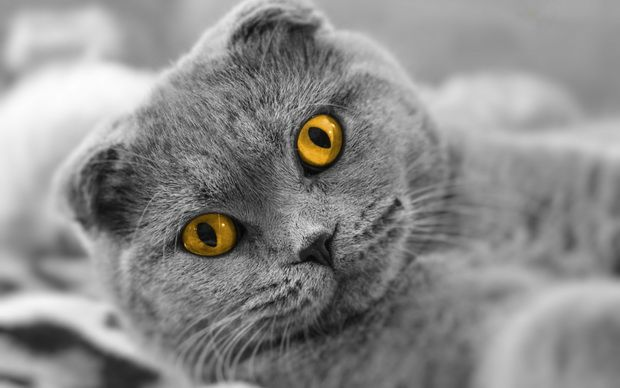 Кошачий интеллект