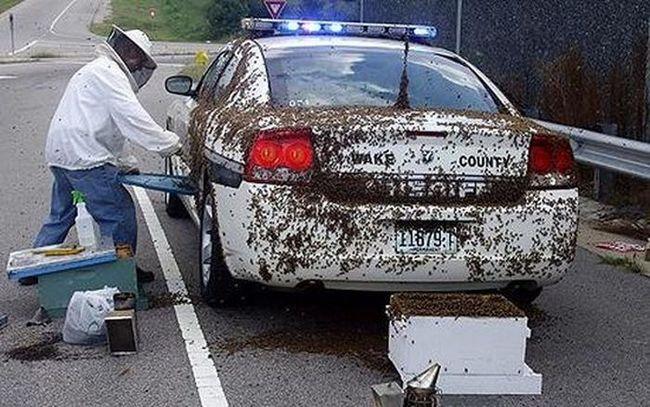 Полицейского атаковали 50 тысяч пчел