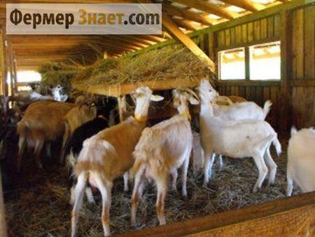 Koza u korito