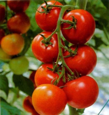 tomatescongelados