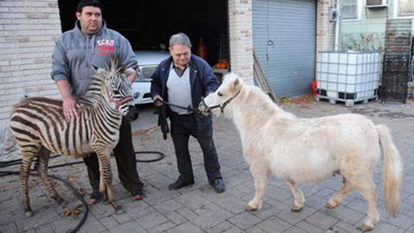 Razz i Casper pobjegao iz zoološkog vrta u New Yorku (foto: nydailynews.com)