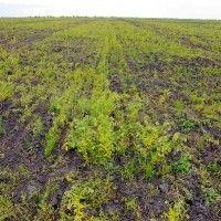 Koncept plevele a jejich škodlivosti