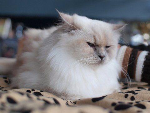 Популярные успокоительные средства для кошек — описание и отзыв