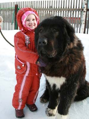 кавказская овчарка и ребёнок
