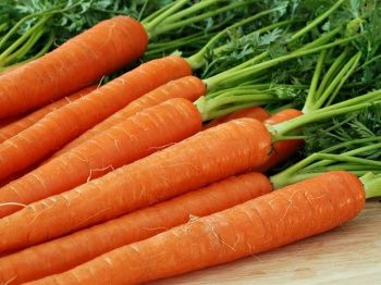 Посев, выращивание и сохранение моркови