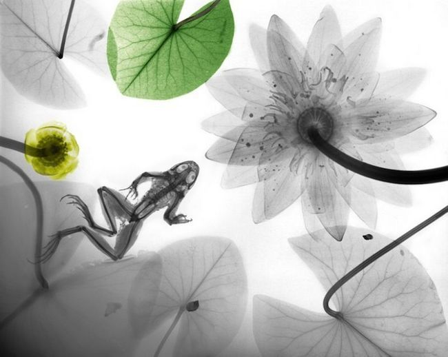 Zapanjujuće slike prirode koje je X-ray