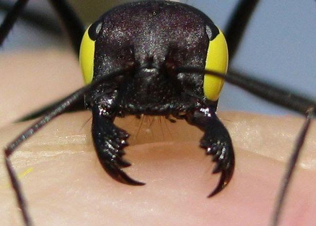 Повязка на глазах помешала муравьям вернуться в гнездо