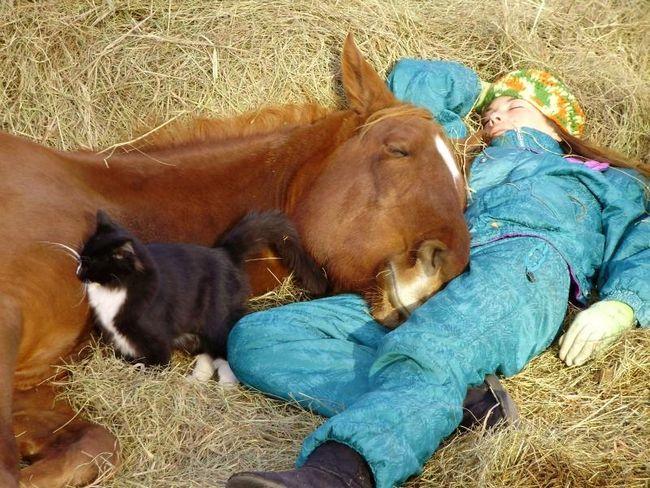 Kao što su spavanje konje