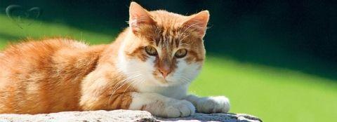 Правда ли, что у кошки 9 жизней, а также другие интересные факты о кошках