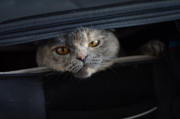Uvjeti prevozu životinja avionom