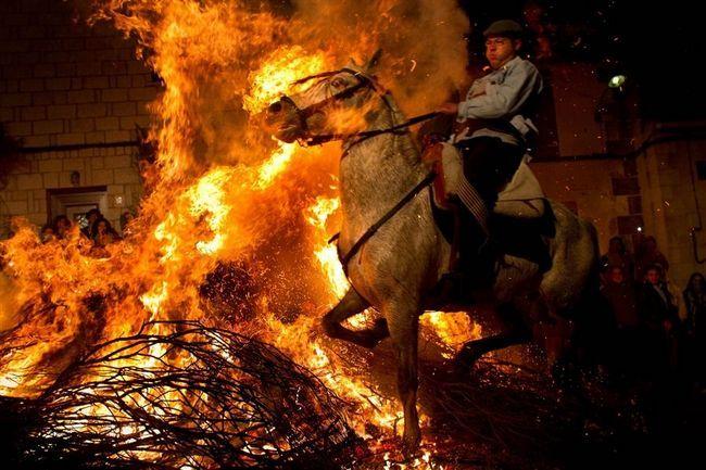 Blagdan Svetog Ante proslave sveca zaštitnika životinja