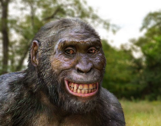 African Australopithecus - naših predaka.