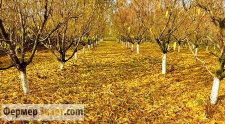 Преимущества и недостаки осенней обрезки плодовых деревьев