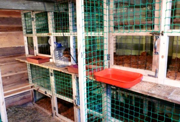 Домашнее содержание кур в клеточных батареях