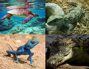Reptili foto klase