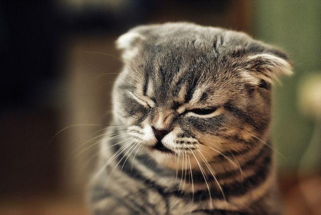 Uzroci alergije na mačke i načina za njihovo otklanjanje