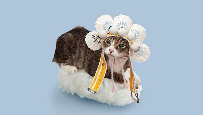 Sushi Mačka Avantura