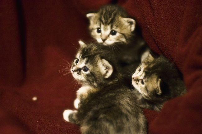 Funny nadimaka za dječake mačke: Ruski imena i nadimke