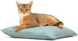 Приручение дикой кошки