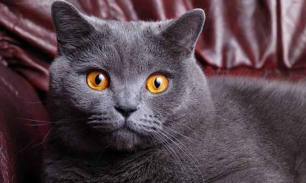 Прививка от бешенства кошкам: что нужно знать владельцам