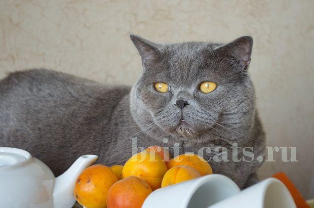 Проблемы с аппетитом у кошек
