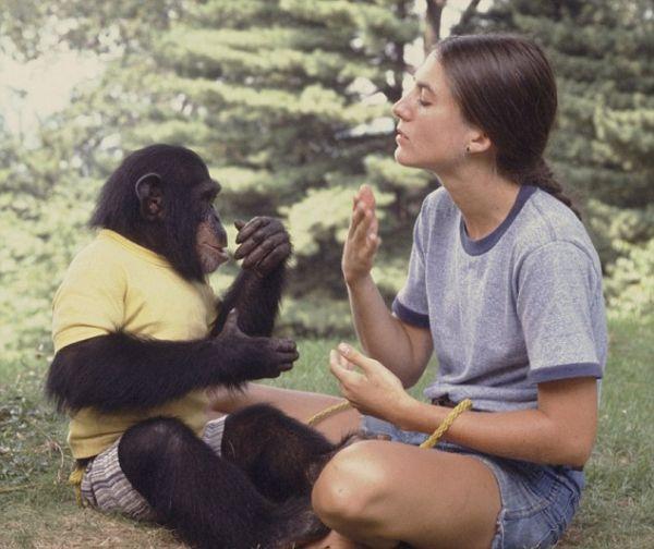 Him, projekt nebo pokus proměnit opice v člověka