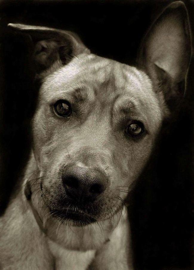 Projekt Treer Scott: Psi iz skloništa