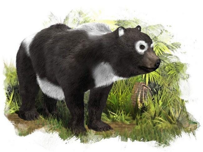 Izumrli predak Giant Panda.