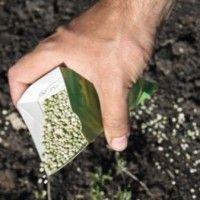 Производство семян суперэлиты и элиты