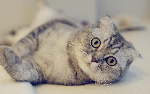 Пропала кошка! Что делать?