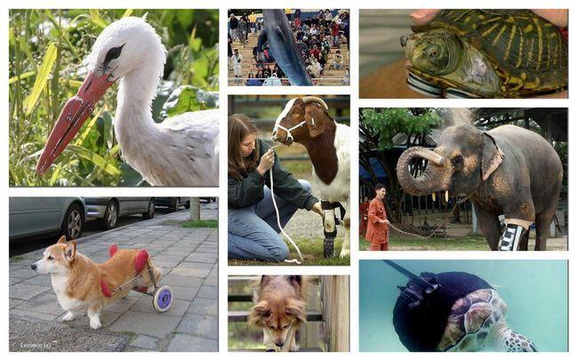 Zvířata protézy.