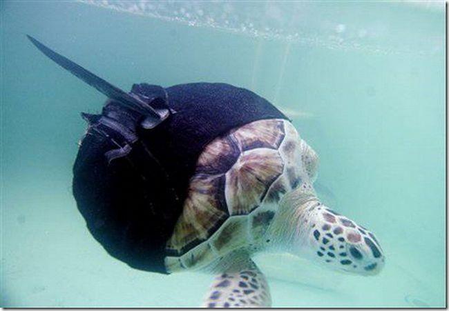 Fin protéza pro želvy.