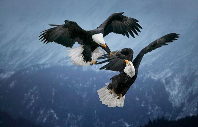 osoblje najbrutalnijih borbi i sukoba u životinjskom svijetu nije život i smrt.