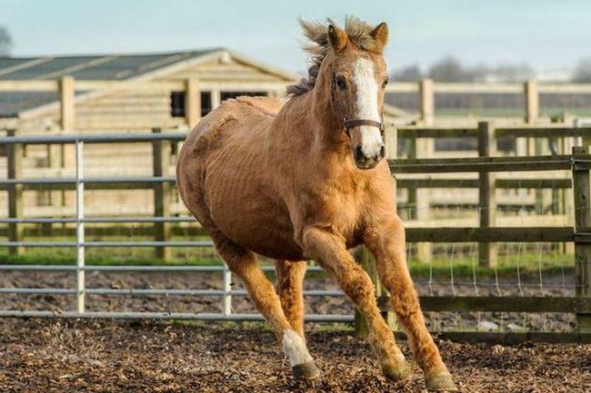 Провалившегося в болото коня спасли пожарные