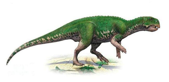 Psittacosaurs (lat. Psittacosaurus)