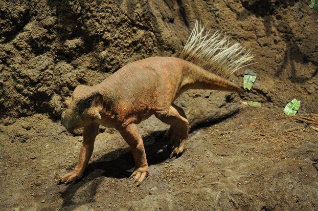 Psittacosaurs model.