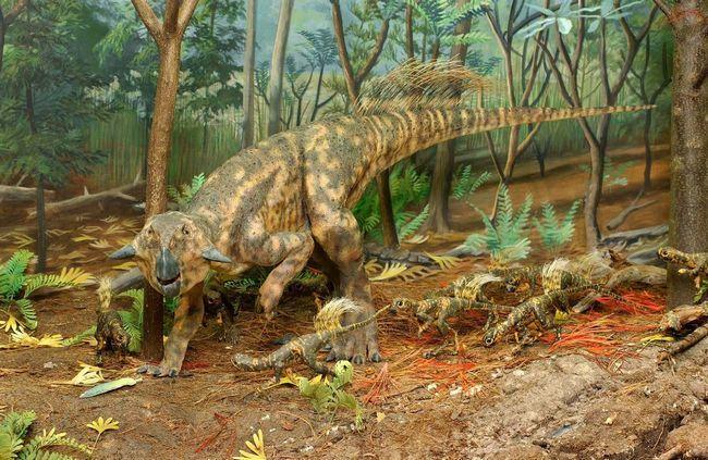 Diorama porodice psittacosaurs.