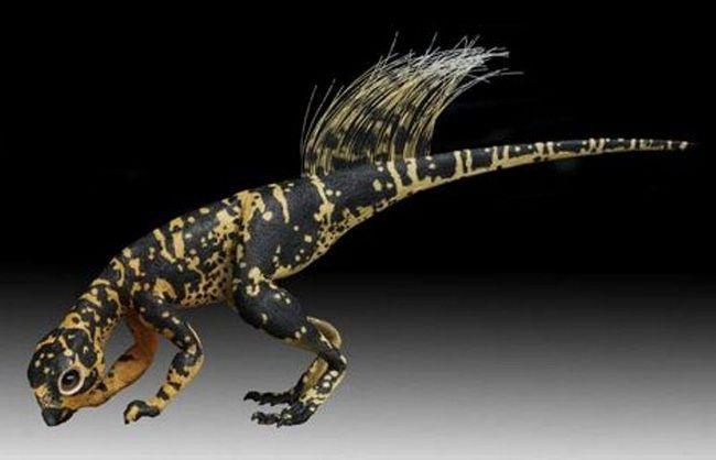 Psittacosaurs nije velika u veličini.