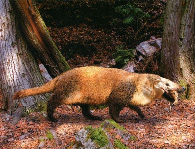Psittacosaurs bila hrana drevnih sisara Repenomamus ROBUSTUS.