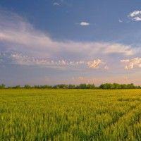 Crop kao grana poljoprivrede
