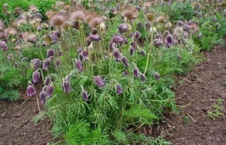 Otrovne biljke za zečeve