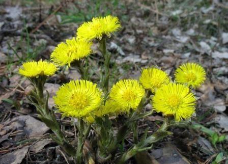 Biljke koje se mogu dati kunićima